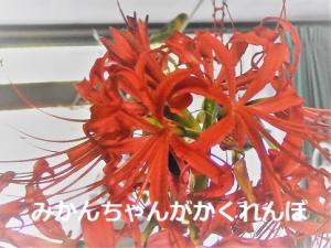 燃える赤いお花のジャングルジム