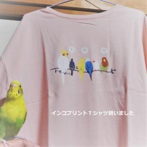 インコプリントTシャツ ゲット!