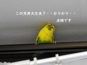 防災点検・・みかんちゃんガンバル!