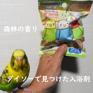 ダイソーのインコグッズ入り入浴剤発見!