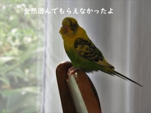 高級鳥プリント生地で・・