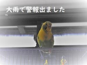 鳥ふんわりタオル!