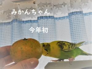 みかんちゃん♥♥