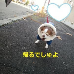 えっ、またお散歩に行かないの~?
