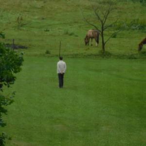 2021年8月11日、馬に餌やり。