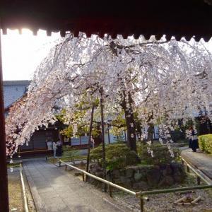 自粛の春 上品蓮台寺