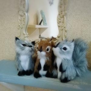 動物3兄弟がやって来た&なんちゃって仲良し&モモちゃん記念日
