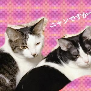 お家で癒されるタッチケアで免疫力アップ【猫ちゃん編】