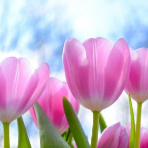 春が待ち遠しくなる心豊かな時間