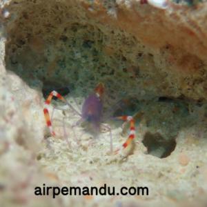 7月1日幼魚いっぱい水納島