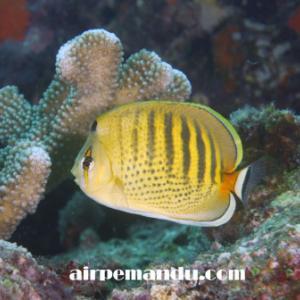 7月8日昼間でも全開サンゴの産卵