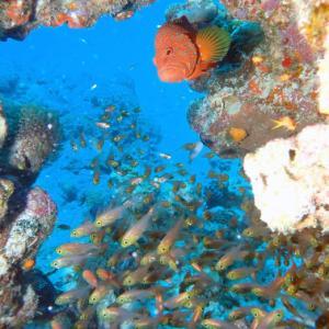 8月11日水納島&瀬底島ダイビング