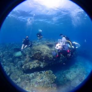 8月28日水納島ファンダイビング