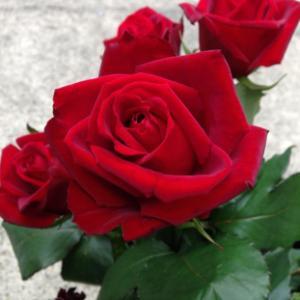 【誕生花】6月19日 バラの花言葉