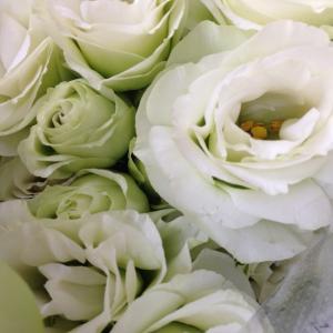 7月30日  白いトルコキヨウ の花言葉