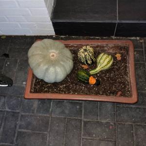 かぼちゃを置くだけで、わくわくするハロウイン