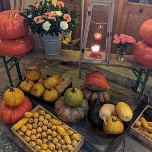【大津市伊香立の出張】かぼちゃ選びは、取捨選択のトレーニングなんだから