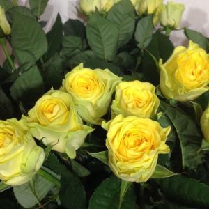 7月21日黄色いバラ の花言葉