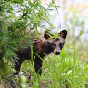 (2020年6月14日)の野生動物撮り『1年ぶりのポン子さん』