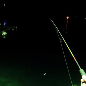 (2021.1.16)のルアー釣り『アジング❓❓メバリング❓❓タヌキング❓❓』