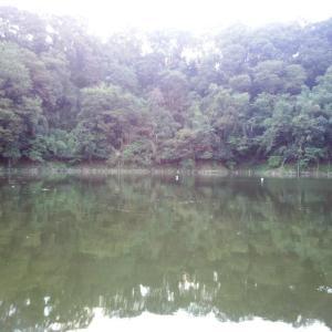 津久井湖・沼本 9月22日