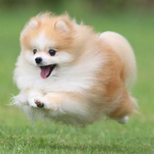 目指せ!雪上飛行犬!!~サンタドッグ2019
