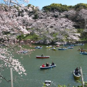 4月の千鳥ヶ淵:千鳥ヶ淵遊歩道を歩いて九段坂上・靖国神社前へ PART4