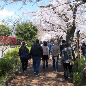 4月の千鳥ヶ淵:靖国神社前と北の丸公園・田安門の周辺 PART1
