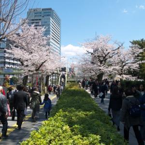 4月の千鳥ヶ淵:靖国神社前と北の丸公園・田安門の周辺 PART2