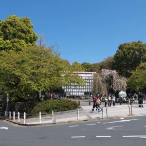 4月の上野公園:上野公園山下から桜並木道を通って噴水広場へ PART1