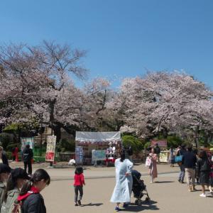 4月の上野公園:大混雑の噴水広場と上野動物園表門の周辺 PART2