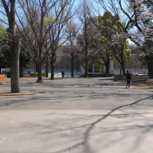 4月の上野公園:東京国立博物館正門前から国立西洋美術館前へ PART2