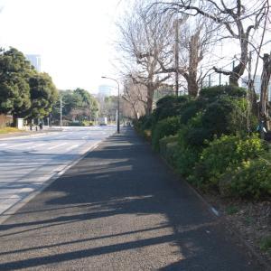 2月の神宮外苑:イチョウ並木道前を通り抜けて明治神宮球場・ゴルフ場前へ PART1