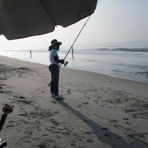 投げるたびに鱚が釣れる!