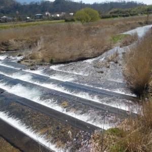 2020 琵琶湖湖西 知内川・他の小鮎釣り
