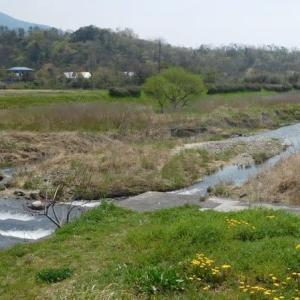 2019 琵琶湖湖西知内の小鮎釣り 4/22搭載