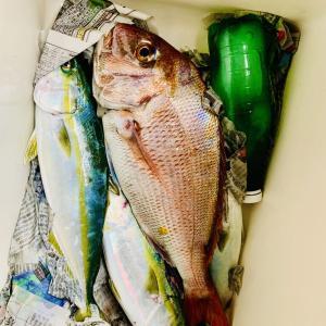 この秋はロクに釣りに行けないまま冬がくるのか