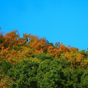 早朝より信州へ 出発! 京都の紅葉も 見納めだろうなぁ