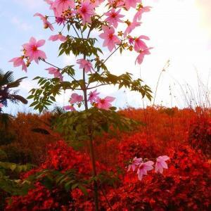 人生の花やねぇ! 気の向くまま 好きな時に 好きなだけ歩けて 好きな所へ行けて!皇帝ダリア