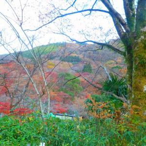 昨日の散歩は10キロ 瑠璃光院~赤山禅院まで 参りました (^^)/