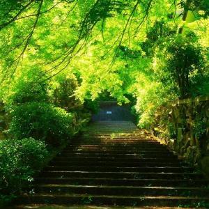 """散歩 次は吉田山 そう言えば、、、""""茂庵もあん""""だけど、、、今はコロナ禍でクローズです"""
