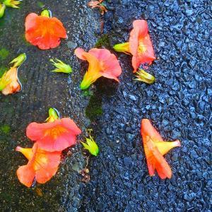 """""""五山送り火""""8月16日決定! 今日は 雨 雨 雨 雨の中のお花達、、、"""