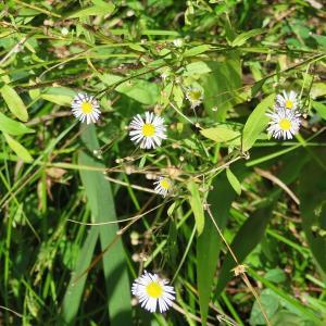 蚊を取り逃がしてしまう。。。この視力と鈍さ ($・・)/~~~ 比叡山の植物