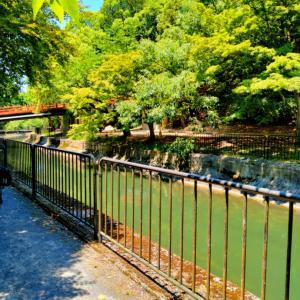 """夏のサイクリング34℃の京都でも """"疎水沿い""""には木陰があり元気に戻れました """"鷺""""の居る景色"""