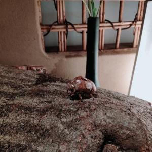 """""""即今藤本""""でランチ会 葉月のしつらえは 送り火 ほうずき 山シャクヤクの実とナデシコに蝉の殻"""