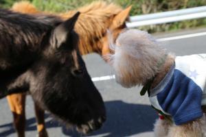 都井岬:御崎馬(みさきうま)と奇蹟の出会い
