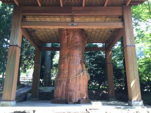 阿蘇の国造神社 神聖な巨木に礼拝