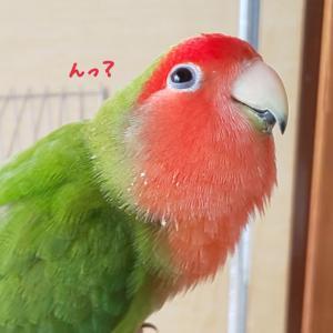なに見ているの?