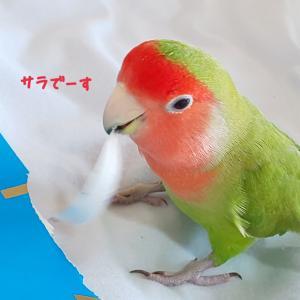 サラくんの羽が・・・
