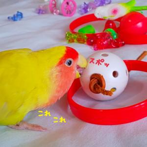 おもちゃで遊びました~❤